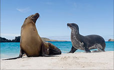 GALAPAGOS ISLANDS, ECUADOR Adventures Afloat: The Galapagos: Natural and Cultural History