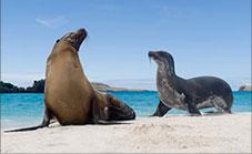 GALAPAGOS ISLANDS, ECUADOR Adventures Afloat: The Galapagos: Natural and Cultural History