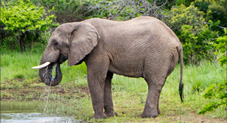 BOTSWANA / ZAMBIA / ZIMBABWE Wild Africa: Botswana, Zimbabwe and Zambia
